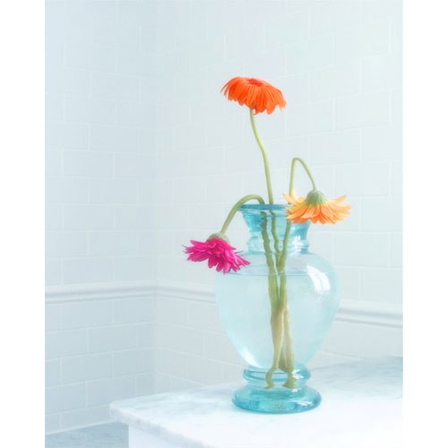 Gerbera Wilting in Vase