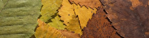 YO_Elm_leaf_seasons_pano_retouch_00