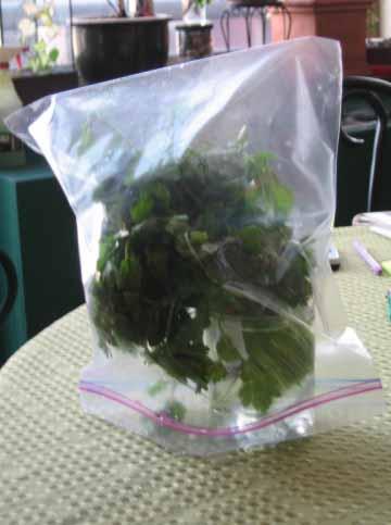 herb baggie