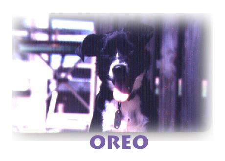 Oreo, probably around 1981, Photo by RobertLeedy