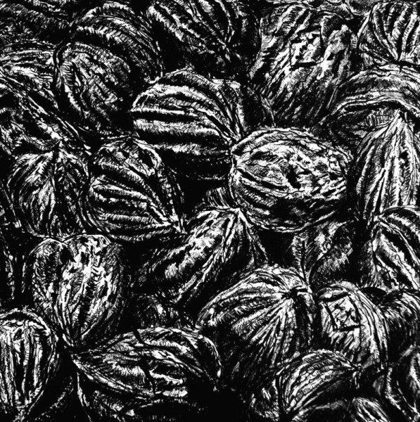 PR-2002-03 Walnut Jungle (Cropped)