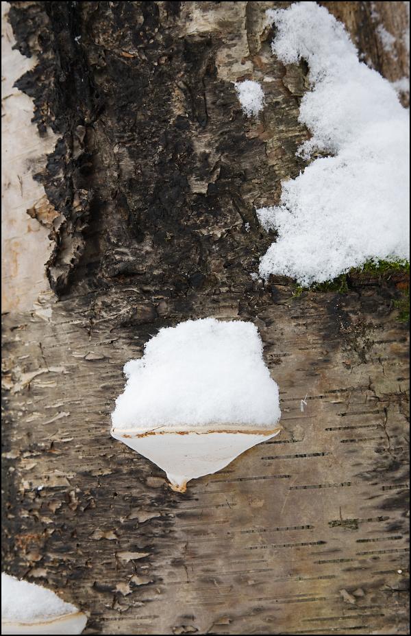 Tufts of Snow