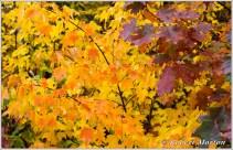 leaves-iii