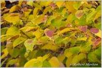 leaves-xv
