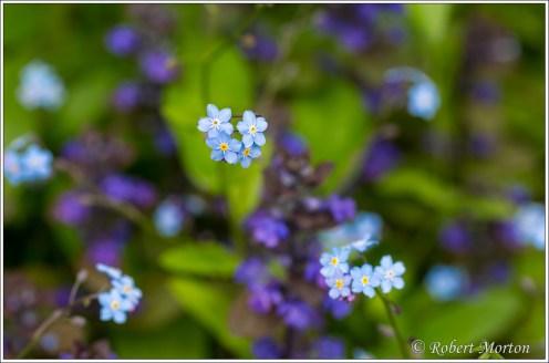 Blue Purple Pattern