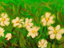THE PLANT I LIKE 2012 (2)