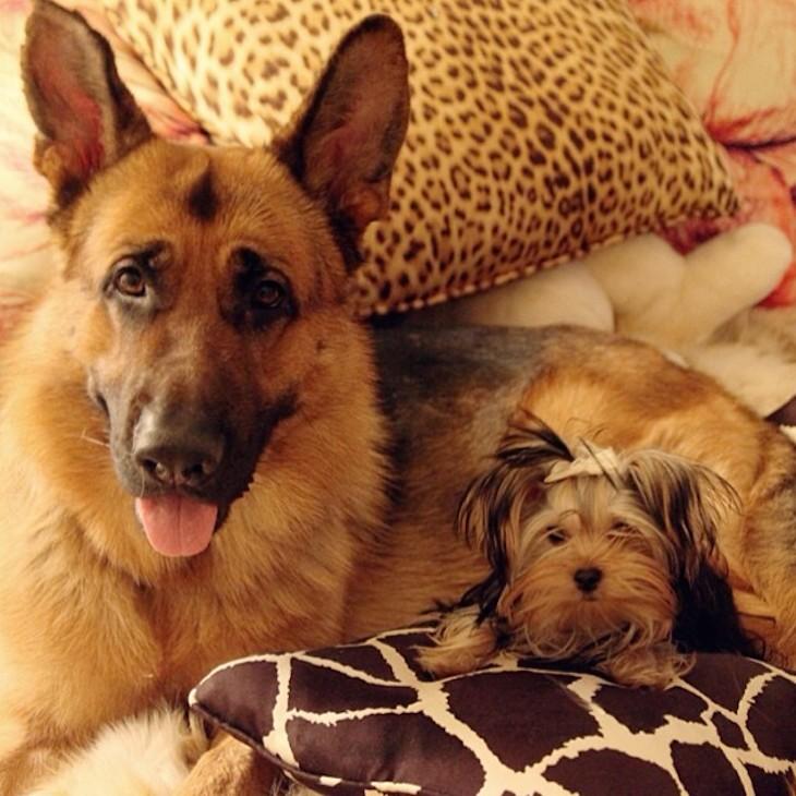 Lupo and Viola