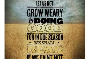 Feb 15 – Harvesting or Planting