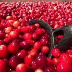 Cranberry Love