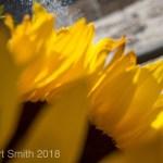 People Portraits: Sunflower Saturday