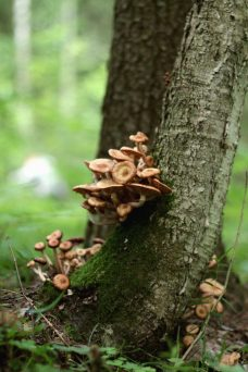 Mushrooms grow on trees
