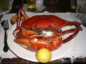 coconut-crab