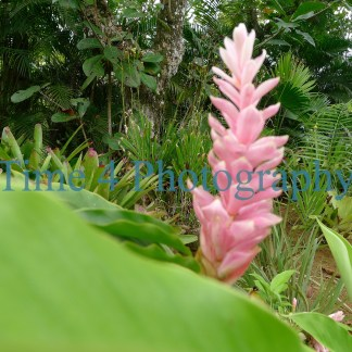Pink inflorescence among green vegetation