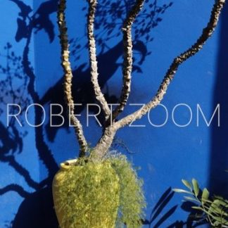 A long and thin vase covered with vegetation and bearing a small tree, against a blue wall, in Marrakech, Morocco.