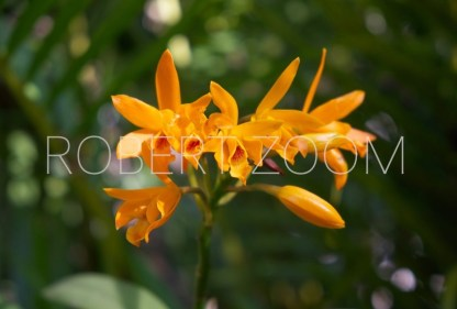 Orange coloured flower stands in sharp contrast to the green vegetable background, in a lush tropical garden in Brazil