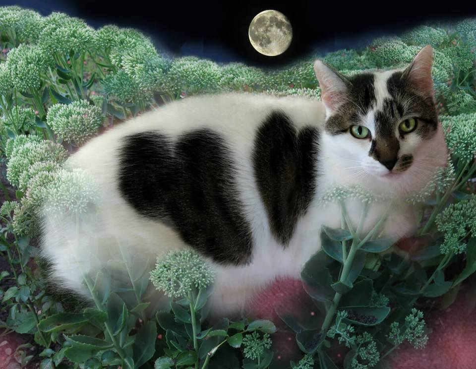 I Killed My Cat | Robin Botie in Ithaca, New York, photoshops a portrait of the cat she had euthanized.