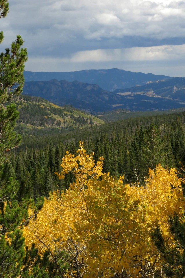 Robin Botie of Ithaca, New York, photographs the aspens turning yellow in the Rocky Mountains.