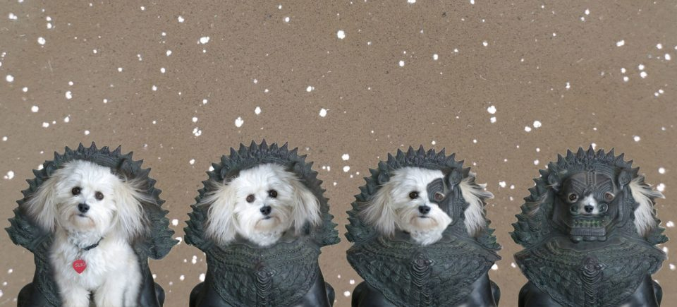 Robin Botie of Ithaca, New York, Photoshops her inherited Havanese dog into a statue.