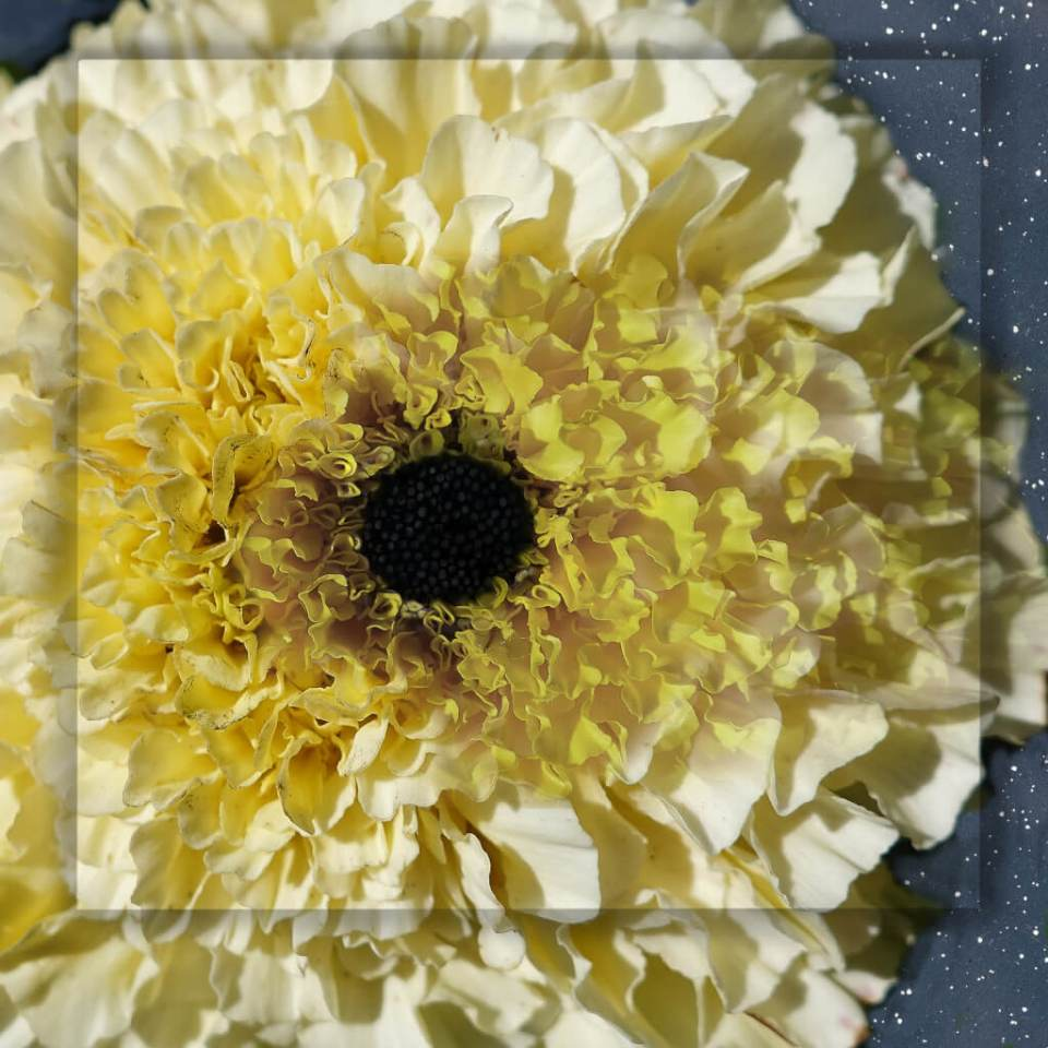 Robin Botie of Ithaca, New York, photoshops the eye of a flower to represent the black hole that happens when a loved one dies, that happens when a writer falls into creative block.