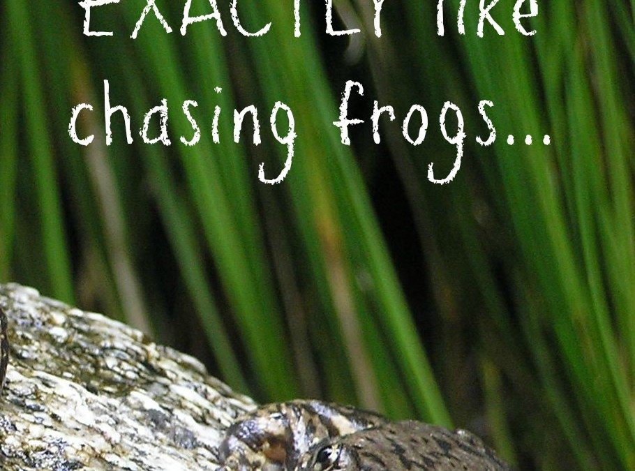 How writing is EXACTLY like chasing frogs