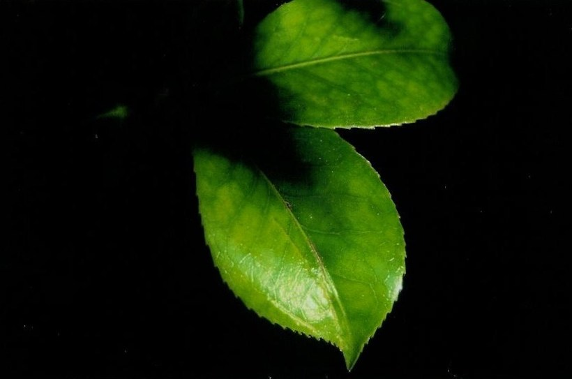 "This Throwback Thursday highlights the ""AHA"" moment I had when photography clicked for me. It was with this simple little leaf isolated in a sea of black that I understood photography wasn't about taking … it was about creating. 