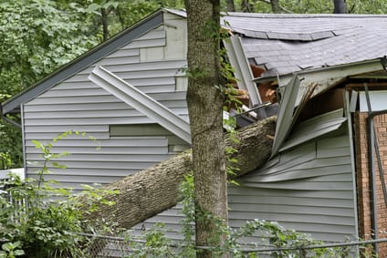 Who Should Pay for Damages if a Tree Falls on my Car or Home?