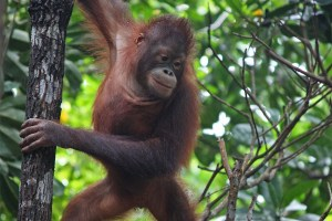 A Survival Safari in Malaysian Borneo that leaves an Indelible Mark