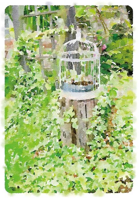 Scenes from a French Hotel - Garden Birdcage © Robin E. H. Ove All Rights Reserved