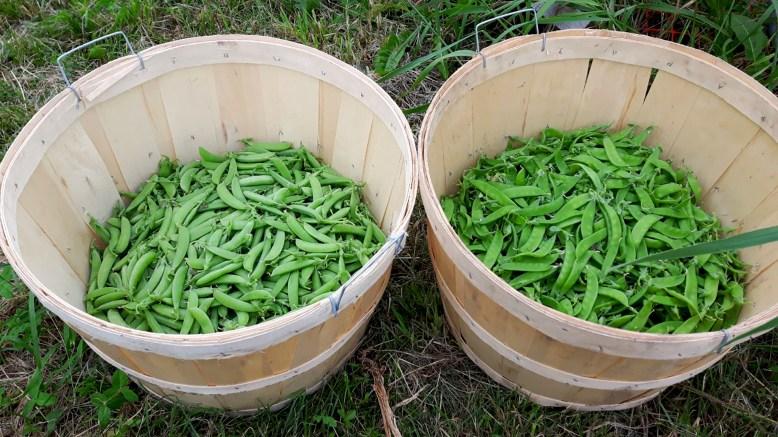 Farm Fresh Vegetables In Toronto