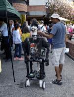 Robot - report.1