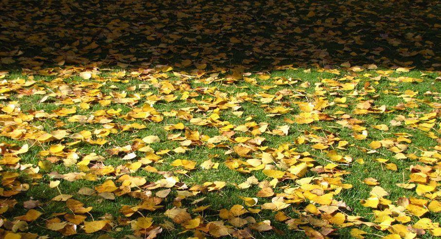 Cultivar en otoño