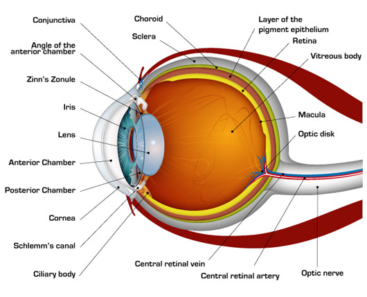 medical robotics human-eye-diagram