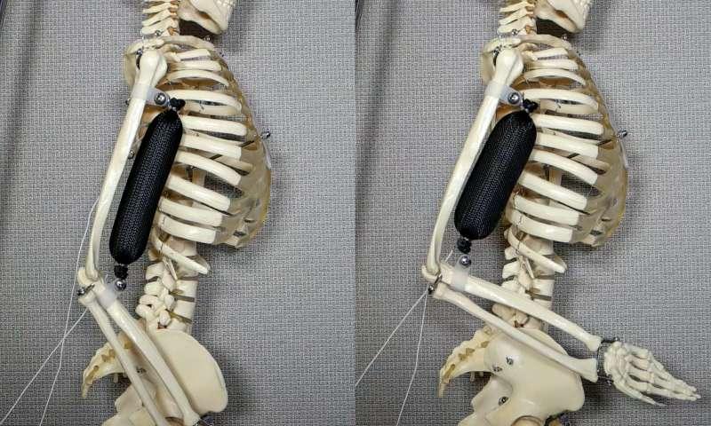 columbia eng skeleton