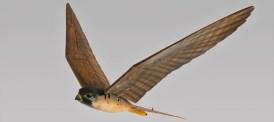 Robotfalk skrämmer bort fåglar på flygplatser