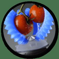tomato_pluck