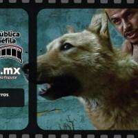 Amores Perros (2000) | República Cinéfila