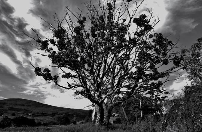 Tree On Family Farm, Kilcar Co. Donegal