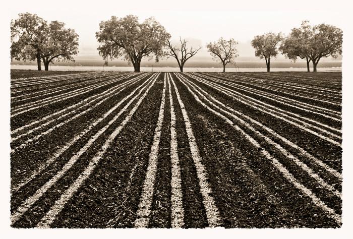 Land lines DSC_0250_