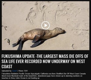 Fukushima Update - The largest mass die offs of sea life ever recorded now underway on West Coast