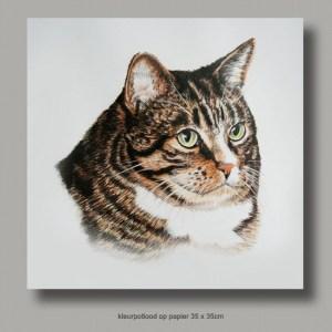 Jan Kramer - Kitty