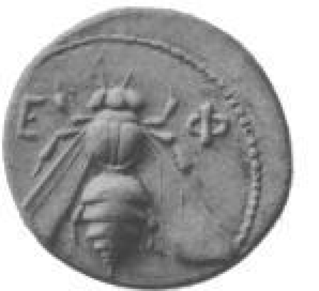 Bee Coin from Sicily 700 BCE