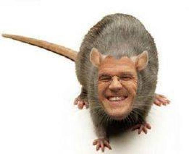De rat Rutte (foto Twitter)