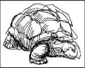 2007-0107-silspr-tortoise.jpg