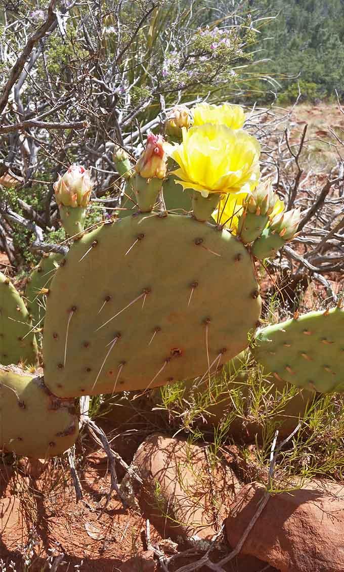 Arizona Trip 22