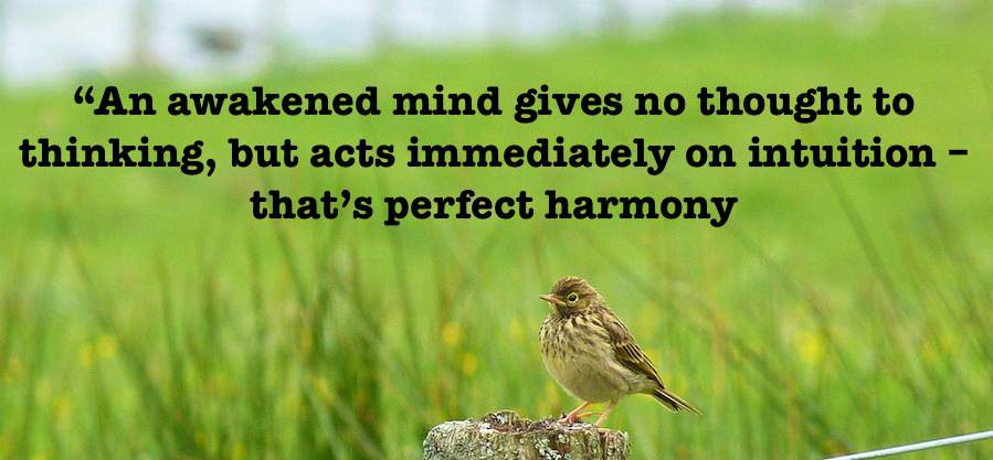 meadow bird with inspiring quote