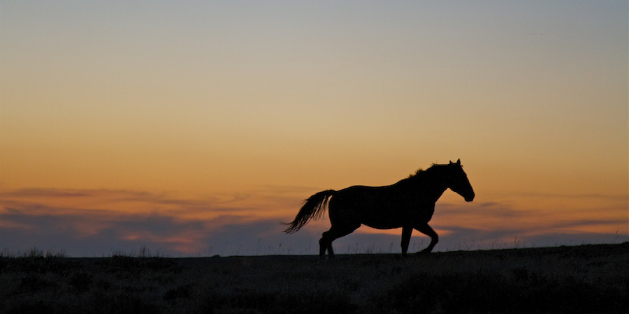 wild horse silhouette in sunset