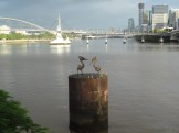 Sculpture, Brisbane River
