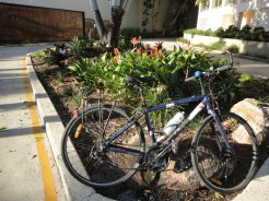 Bike and heliconias
