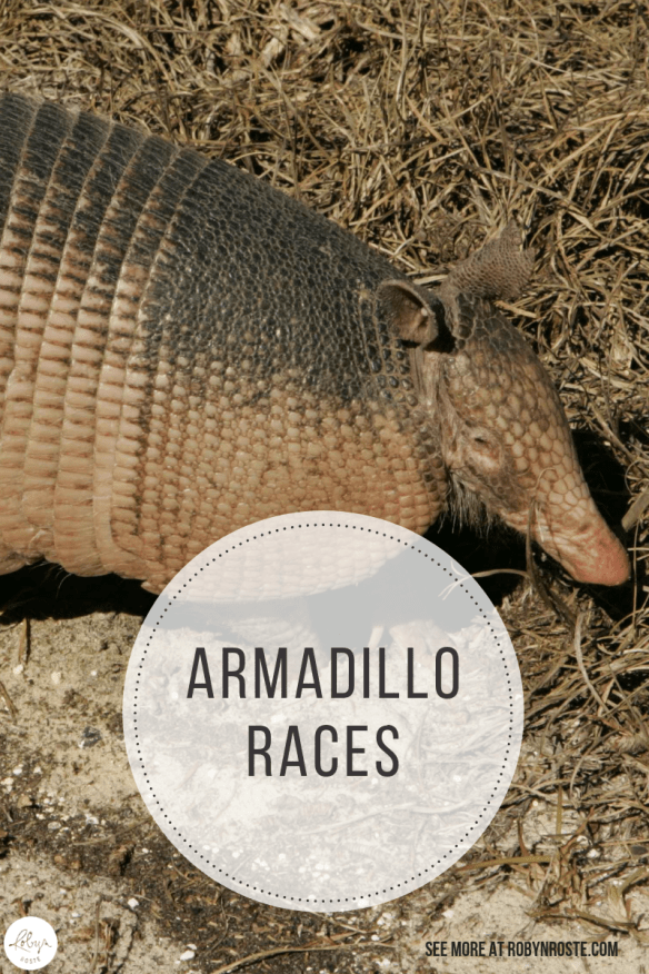 If you think armadillo's are no big deal, think again! Turns out though the armadillo is pretty cool so I'm glad I was able to address my subconscious prejudice against the armadillo and treat him with the respect he deserves.