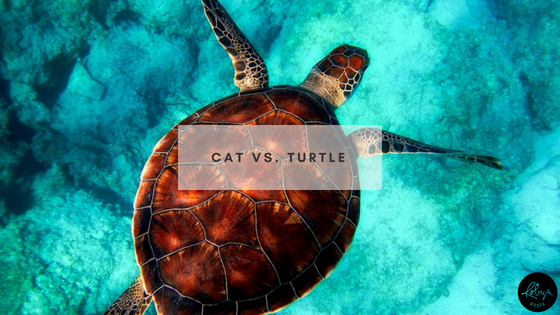 Cat vs. Turtle